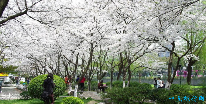 武汉大学、武汉