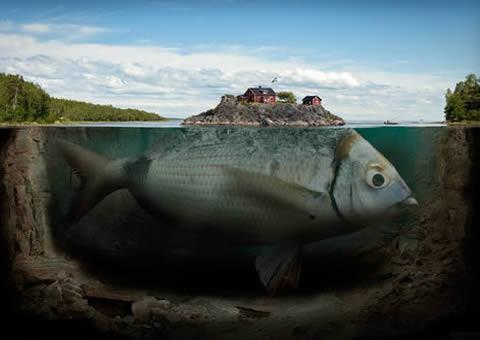 世界上最大的鱼是什么鱼,鲸鲨(长20米/重55吨)