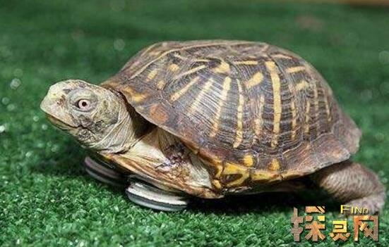 寿命最长的动物,灯塔水母能长生不死