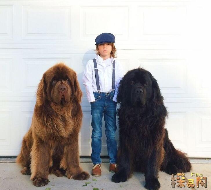 世界上十种寿命最短的狗狗,大家赶快来了解一下吧!
