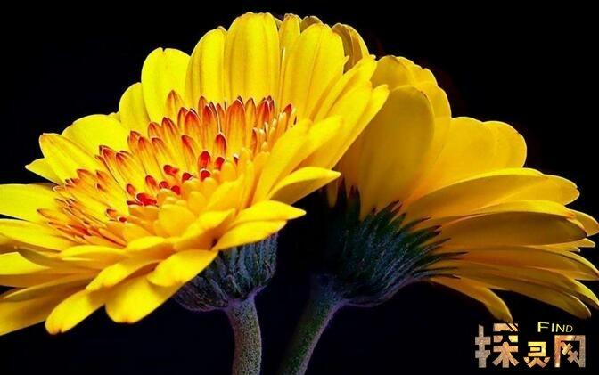 世界上最高贵神秘的花,来自的古巴幽灵兰花(看一眼让人肝肠寸断)
