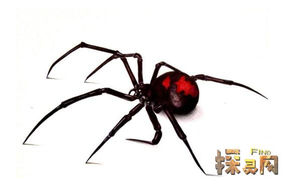 世界上毒性最强的蜘蛛,咬一口直接丧命(六眼沙蛛)