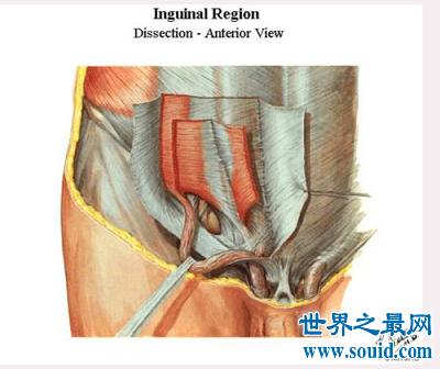 影响人体性功能的最隐私部位:腹股沟区