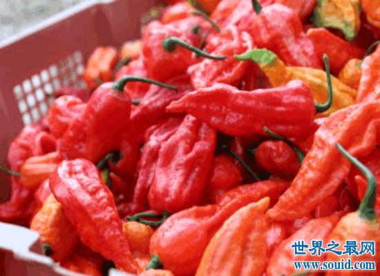 世界上最辣的辣椒排行榜前十名  排名第一的差点辣死人
