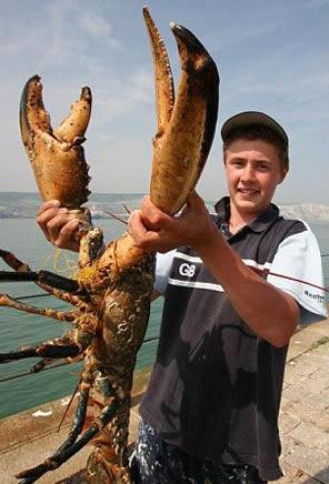 世界上最大的龙虾,长1.2米重40斤的大龙虾(图片)