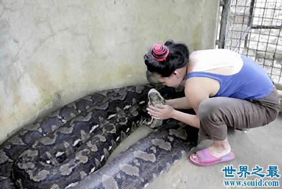 发现世界上最大的蛇,长19米一口吃掉成人(多图)