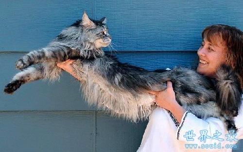 世界上最长的猫,长达1.23米(图)