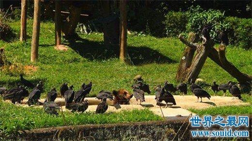 世界十大著名野生动物园,感受野性的呼唤
