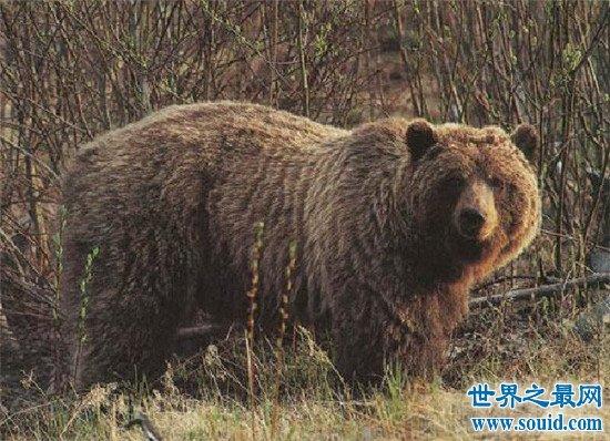 世界上最恐怖的动物 被任何一个缠上都很危险