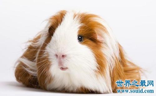 寿命最短的十种动物,最短只有24小时。