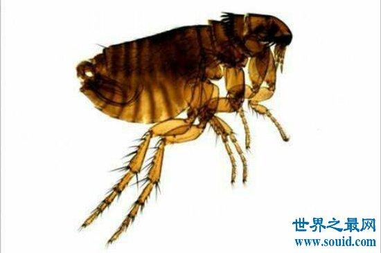 世界十大毒虫排行榜,小小虫子每年让百万人染病!