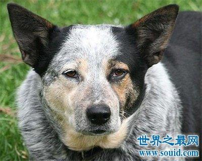 狗的寿命是几年 看完好心酸啊