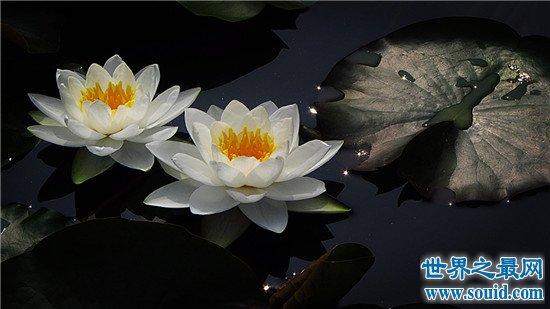 世界上十种最美的的花,天堂鸟真的像一只鸟