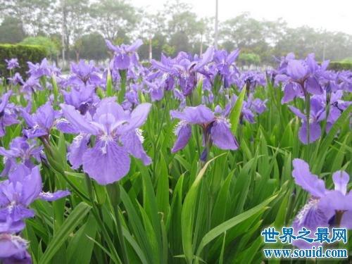 世界上最美的花,排名第一在生活中经常见到
