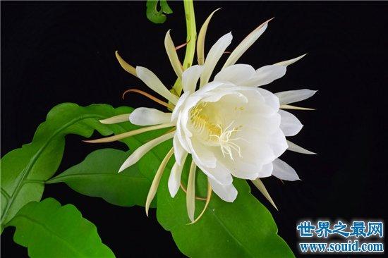世界上最美的花排行榜,探究那些美到爆炸的花儿!