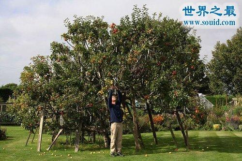 世界上能长出最多品种的果树,多达250种