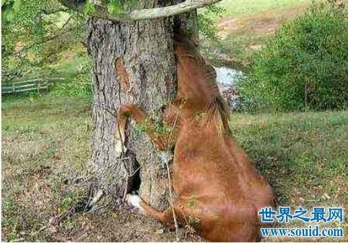 世界上可怕的植物食人柳,柳枝可以勒死猎物